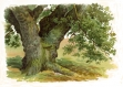 Trees And How To Paint Them In Watercolours